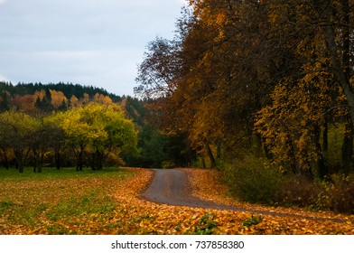 The road surrounded by golden leaves. Leaf peeping road trip.