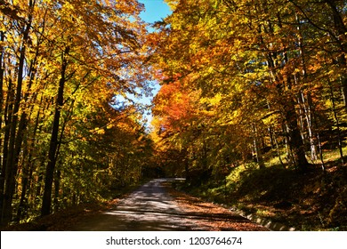 the road that crosses the fall forest