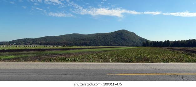Road though farmland. Daytime.