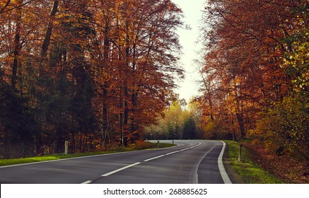 Road through the autumn forest