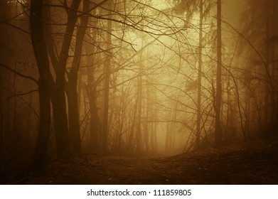 road through autumn forest at sunrise