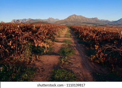 Road through autumn vineyard landscape with mountains in background.