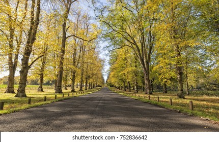 Road through autumnal tree lined Lime Avenue, Clumber Park, Nottinghamshire, England