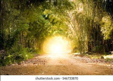 road through bamboo forest and light at the end of tunnel - concept