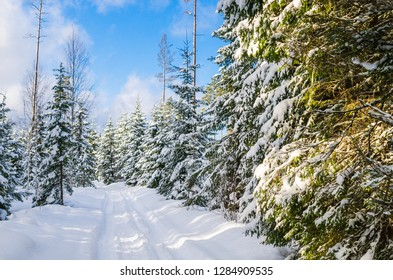 The road through the beautiful coniferous snowy forest