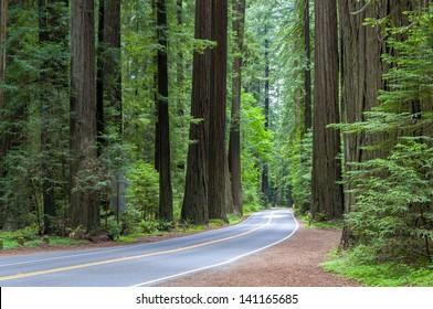Road Through The California Coastal Redwood Forest