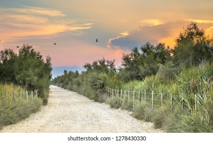 Road through Camarque during beautiful sunset in regional nature reserve, Provence Alpes Cote d'Azur, France