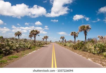 Road through Canaveral National Seashore.