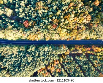 Road through colorful autumn forest