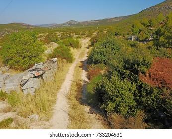 Road through dalmatian hill
