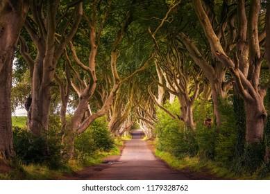 Road through the Dark Hedges tree tunnel at sunset in Ballymoney, Northern Ireland