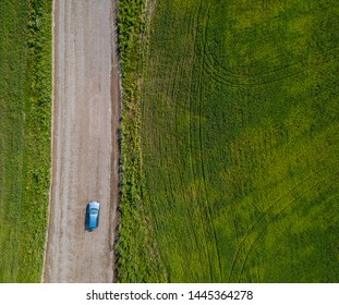 Road through the field. Aerial landscape. People goes through the green wheat field. Nature reservation. Agricultural resources.