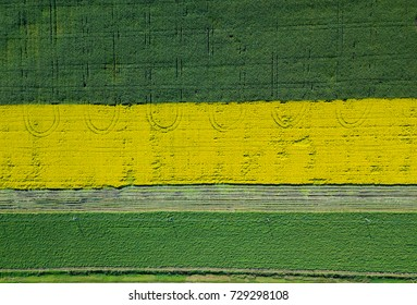 Road through field. Aerial view of colorful field. Harvest of rapeseed, corn and wheat field. Industrial background on agricultural theme. Agriculture and environment in Russia