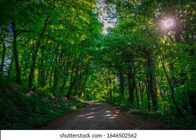 Road through forest of National Park Fruska Gora, Serbia - Shutterstock ID 1646502562