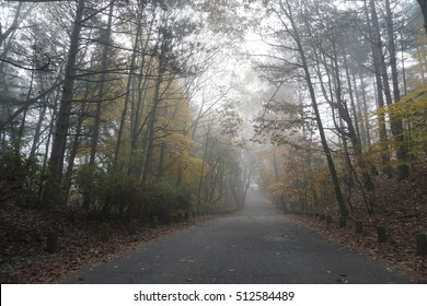 Road through forest on foggy morning