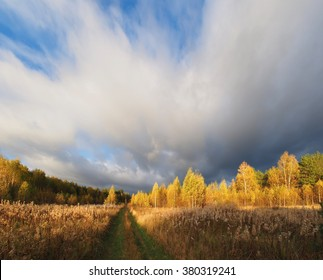 The road through the gold autumn forest