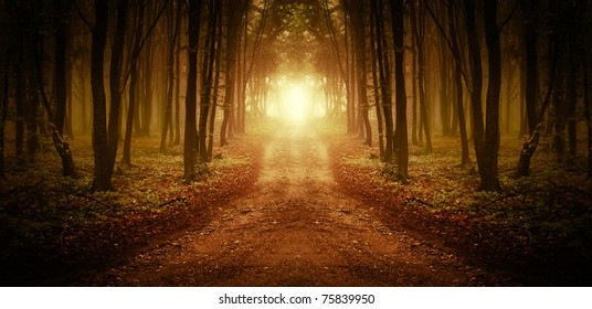 road through a golden forest at sunset