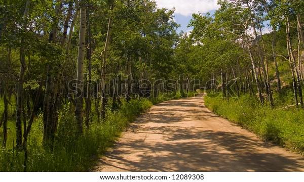 A road through the green aspen groves of Rocky Mountain National Park
