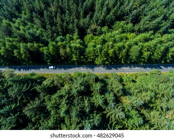 Road through the green spruce forest, aerial view