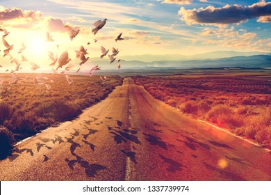 Road through landscape and doves flying.Adventures concept.Road and car travel scenic and sunset.Spirituality and religion in search of the way