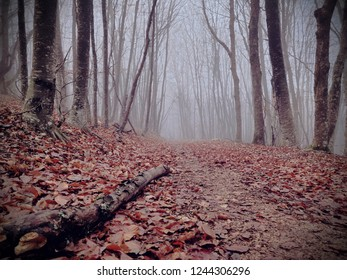 Road through the misty autumn forest