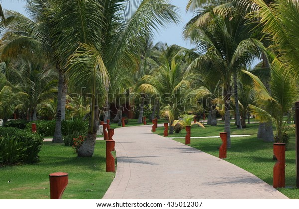 the road through the Palm trees
