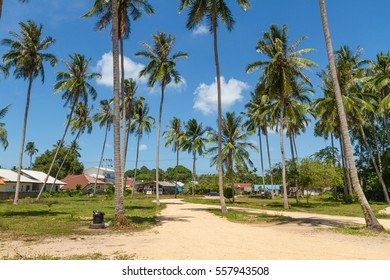 Road through the palms with blue sky at Samui, Thailand, Scenic landscape