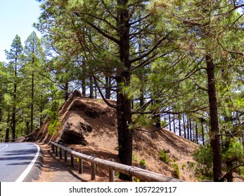 Road through pinewood, pine trees way in the mountains of Tenerife, Spain, beautiful landscape