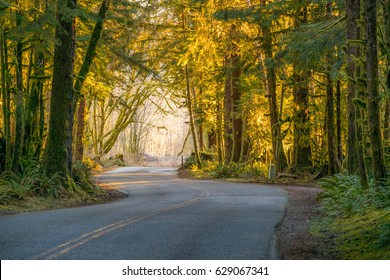 The road through rainforest with lots of trees covered with moss. Hoh Rain Forest, Olympic National Park, Washington state, USA
