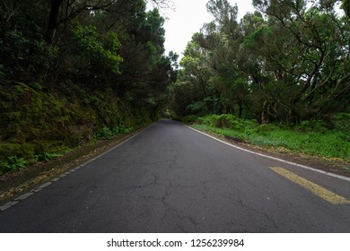 The road through the relict Anaga forest on the slopes of the Macizo de Anaga mountain range. Tenerife. Canary Islands. Spain.