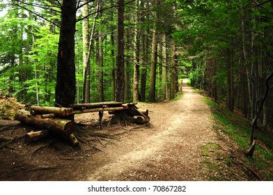 road through a scary forest at summer near a resting place