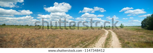 the road through the summer meadow