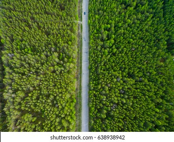 Road through the taiga forest from aerial view, Russia