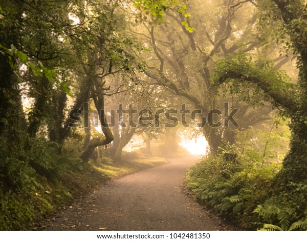 road through trees in morning mist