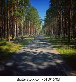 Road through Tuchola Forest in Poland