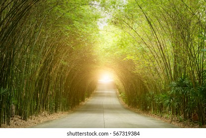 Road through tunnel of bamboo tree forest and light at the end of tunnel - concept