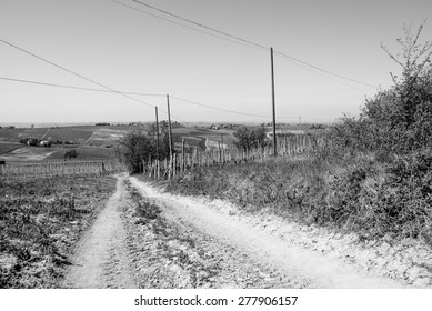 Road through the Tuscan hills in black and white