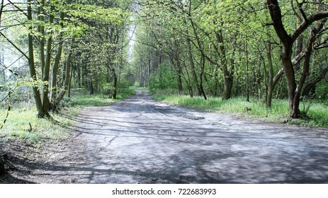 The road and Tree back ground.