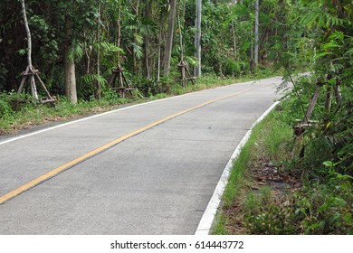 road and tree in Thailand
