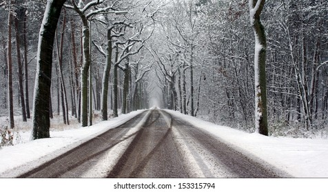 road and trees covered with snow on a cold winterday