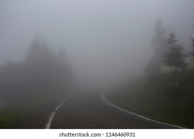 Road and trees in fog. The image is captured in the mountain called Sis of Trabzon city located in Black Sea region of Turkey.
