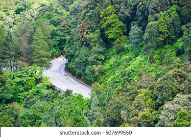 The road and trees to Genting Highland in Malaysia