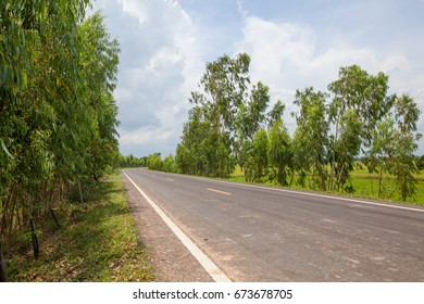 Road and trees in the nature