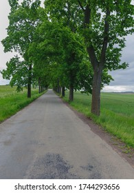 Road with trees on both sides through countryside fields near Broumov, Czech Republic.