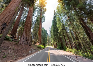 Road trip in Giant Sequoias Forest. Sequoia National Park in California Sierra Nevada, United States.