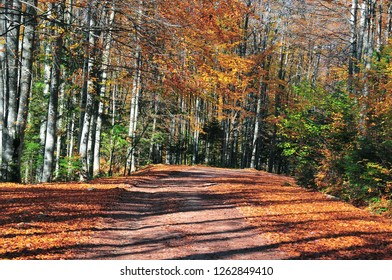 Road trough the  colorful forest