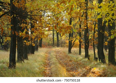 Road under the trees in autumn.