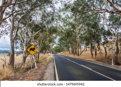 Road in Victoria, Australia, with koala crossing sign.