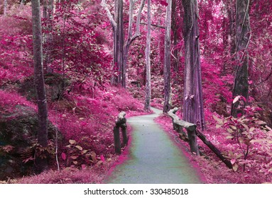 road way to purple forest,  imagination, landscape of tree  ,Beautiful foggy trees with forest road.