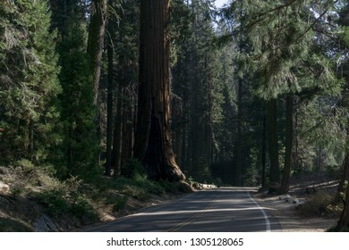road winding through the sequoia national forest with a big sequoia tree next to the road